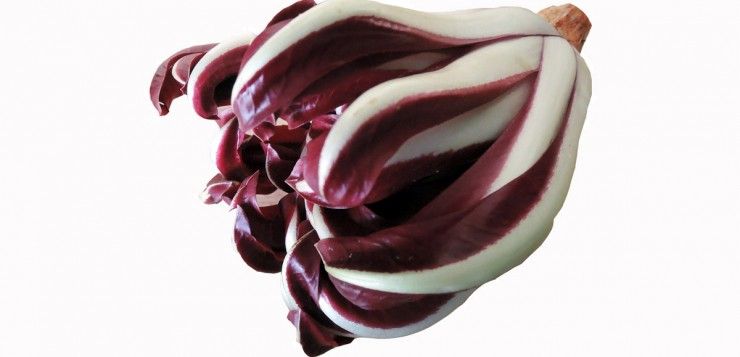 Late Red Radicchio form Treviso