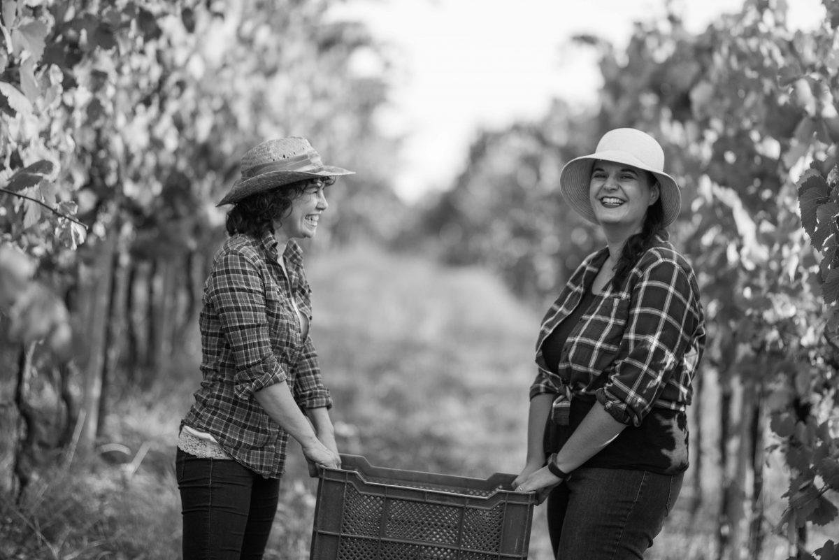 Grape Harvesting, pic by Simone Sartori