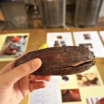 Actual cocoa fruit