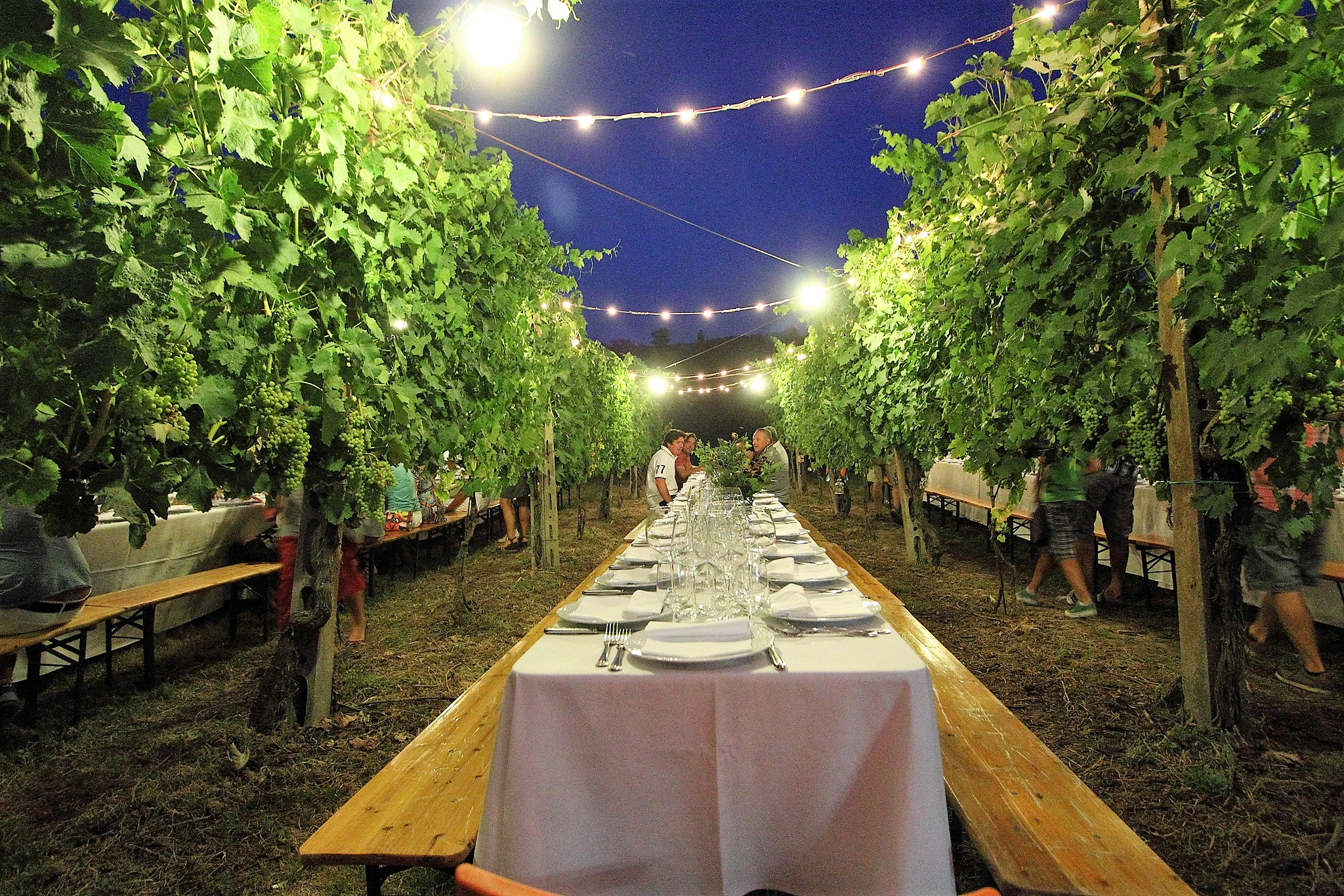 Dinner in the vineyard, photo by Valdichiana Living - What to do in Valdichiana